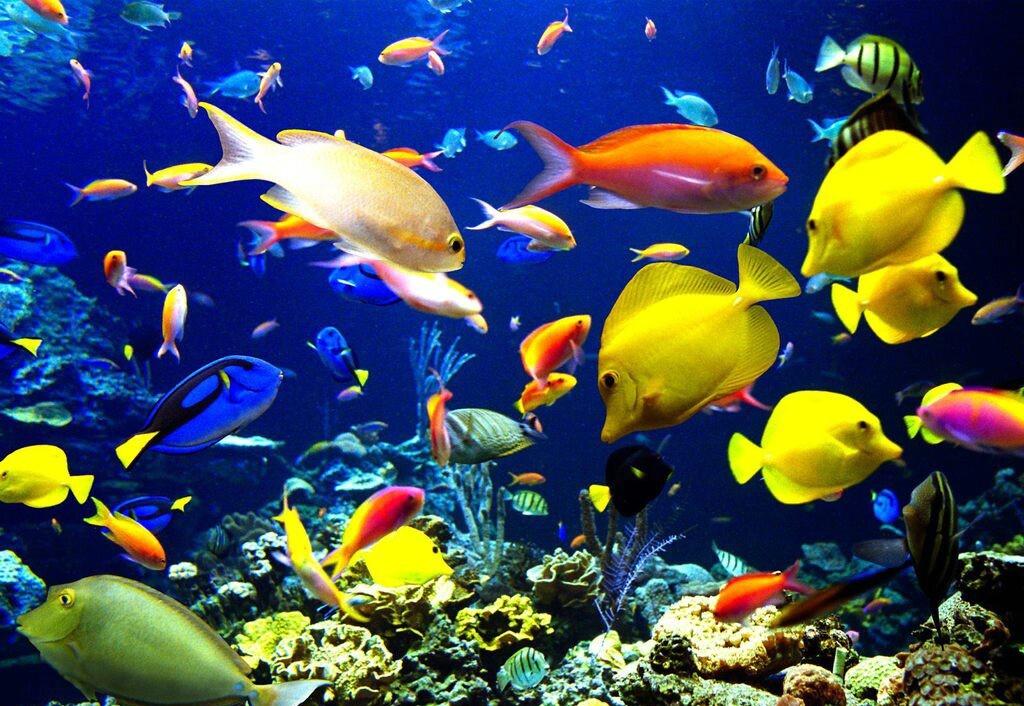 fish tropical poisson - photo #9