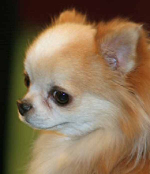 The Richest Pets In The World Therichest