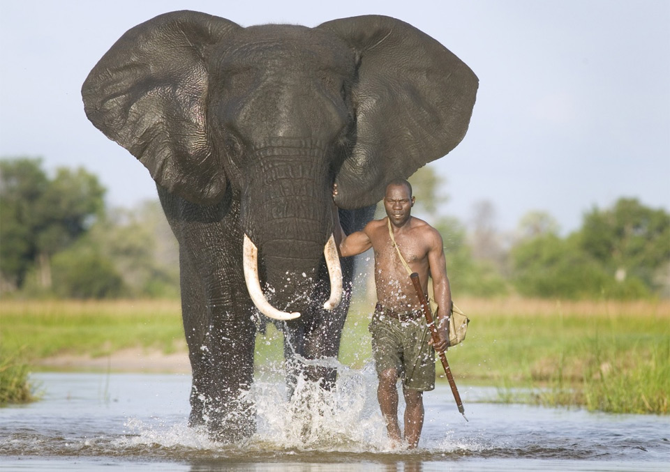Most Dangerous Animals in the World | Personal Blog