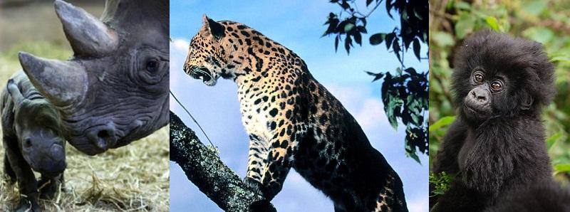 Most Endangered Animals 2017