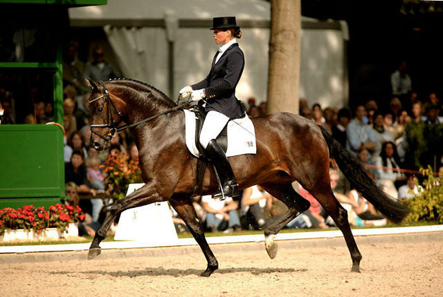 The Most Expensive Horses In The World Therichest